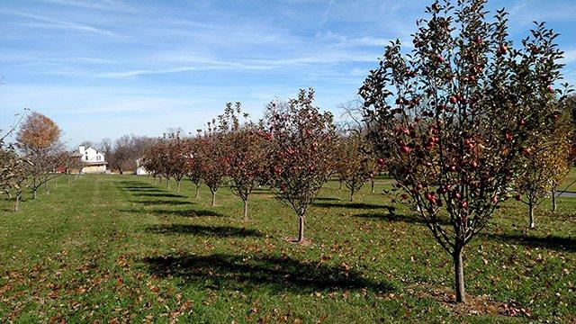hardball-cider-orchard