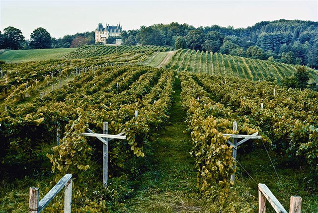 The Biltmore Estate vineyards